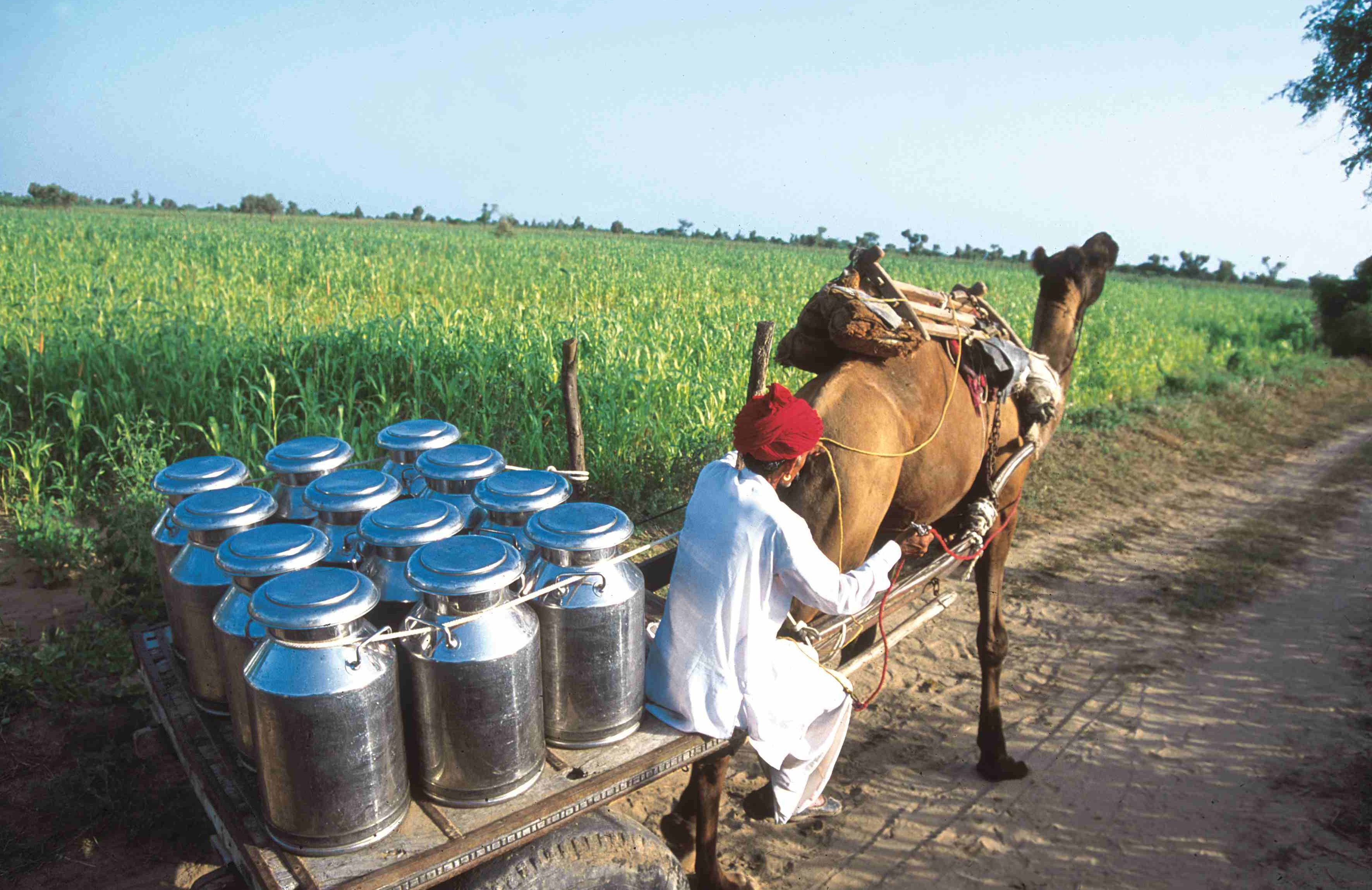 Milk And Its Relevance To The Indian Economy Asiaconverge
