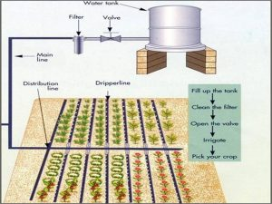 jharkhand-drip-irrigation-using-gravity.schema
