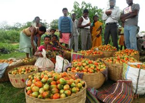 jharkhand-harvest