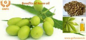 neem-neem-oil2