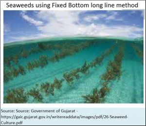 2018-06-12_seaweed-fixed-bottom-long-line