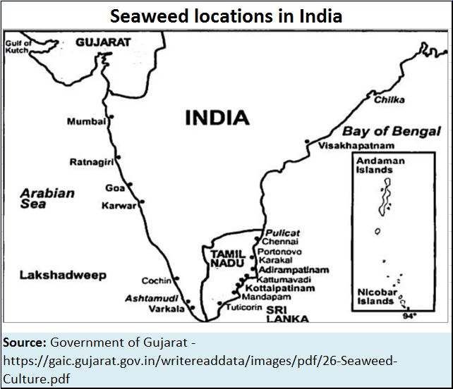 Cultivating seaweed could be a massive opportunity for India