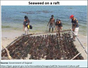 2018-06-12_seaweed-raft