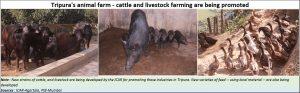 2019-03-10_09_Tripura-Livestock-farming